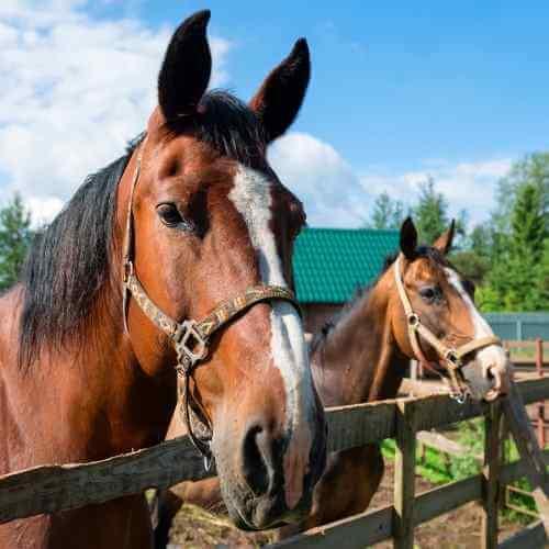 Horses near fence - Horse Barns of Virginia